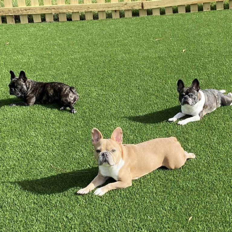 Learn How Artificial Pet Turf Helps Eliminate A Soggy Lawn & Muddy Paw Prints In The House!